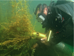 Diver Suction Harvesting
