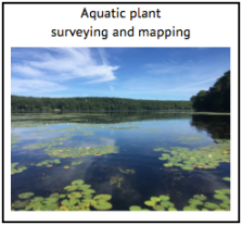 Aquatic plant surveys and mapping